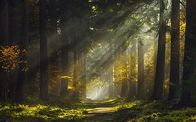 sun_rays_morning_forest_path_mist_trees_