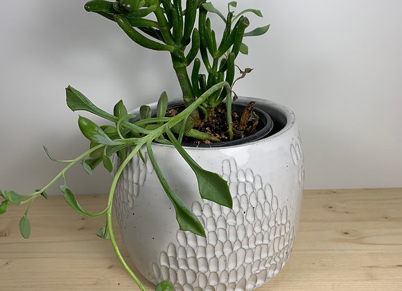 """5"""" Planter - Etched Collection"""