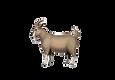 goat_edited.png