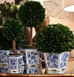 Preserved Boxwood in Ceramic Pot