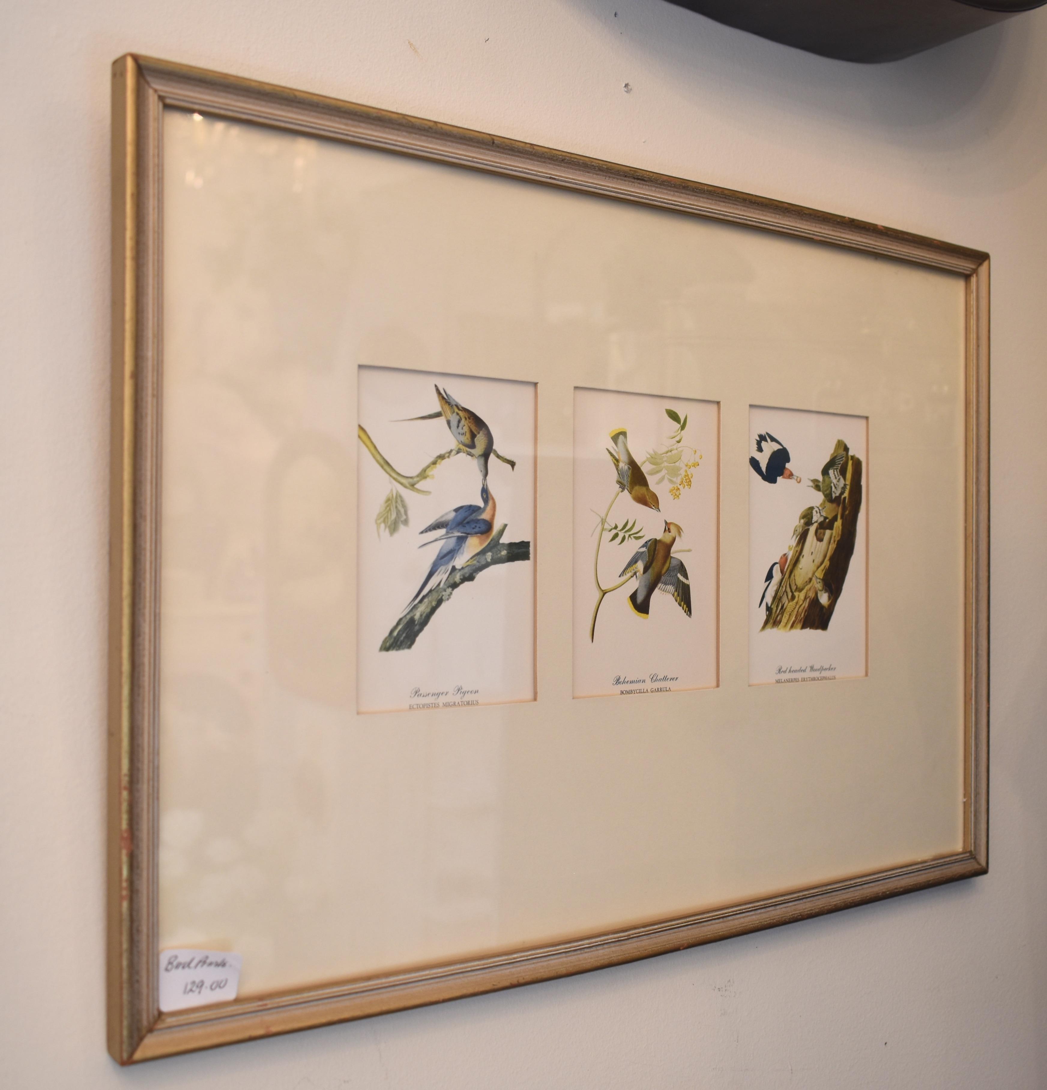 Vintage Framed Bird Prints