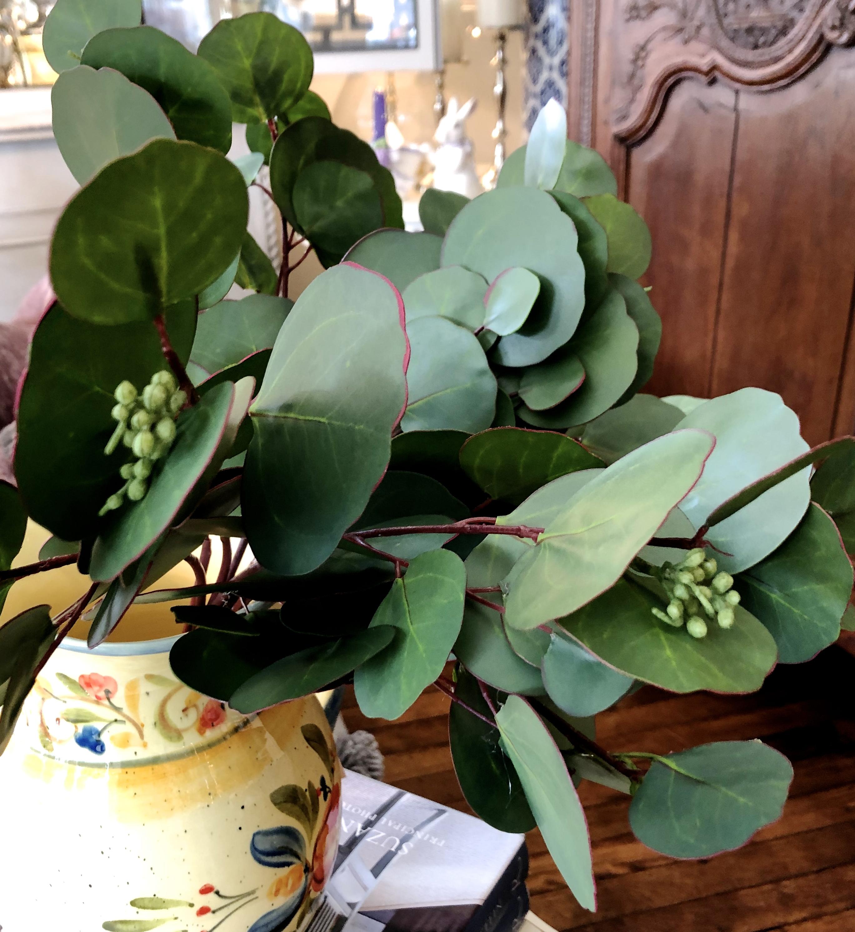 Eucalyptus Bunches
