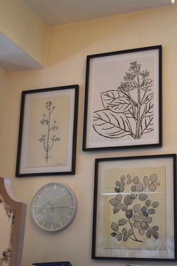 Asst Framed B_W Botanical Drawings