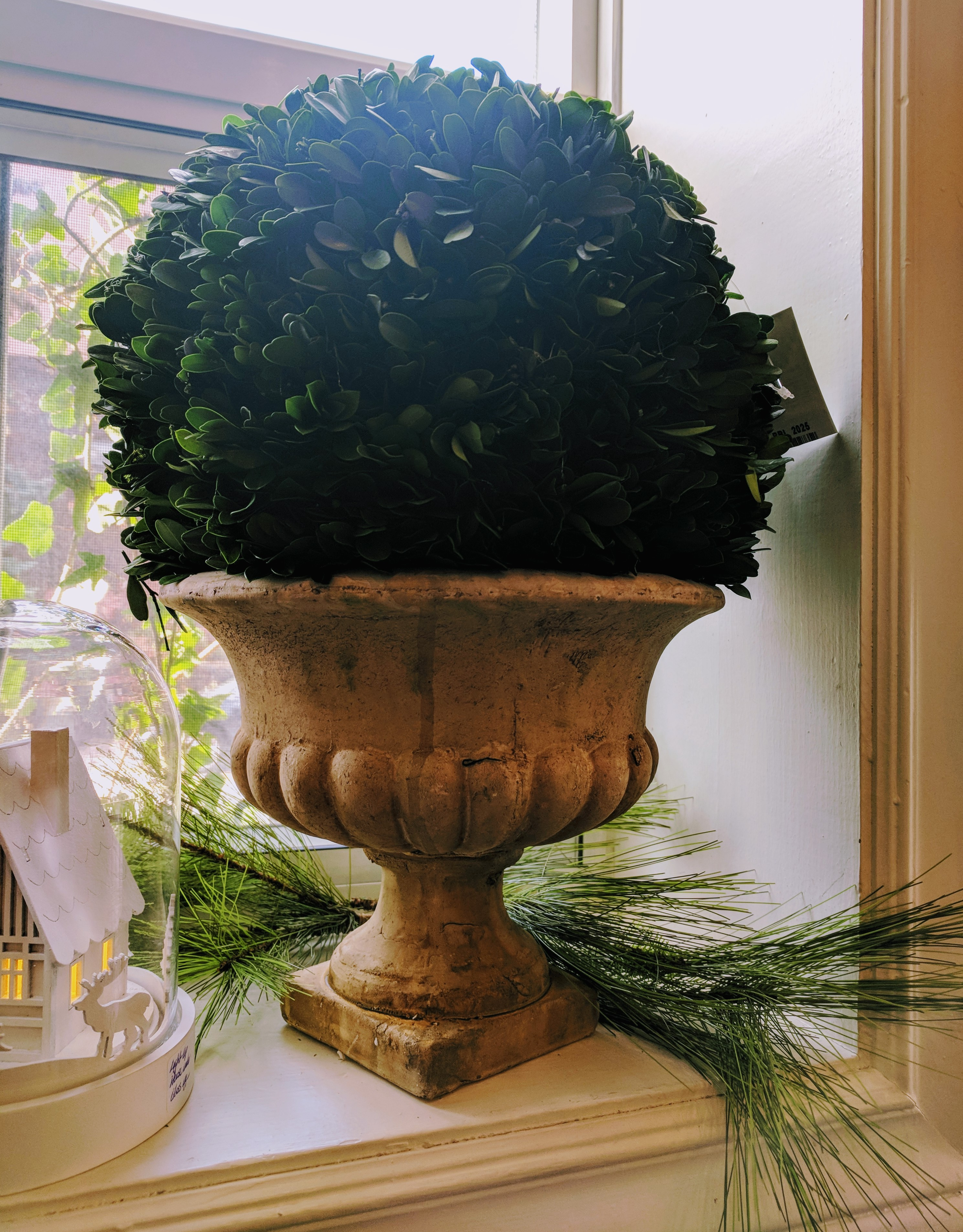 Boxwood in Footed Container
