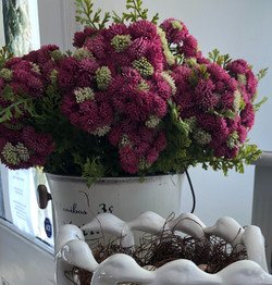 Sedum Bunches in Pink and White