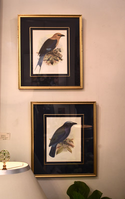 Beautifully Framed Vintage Bird Pictures