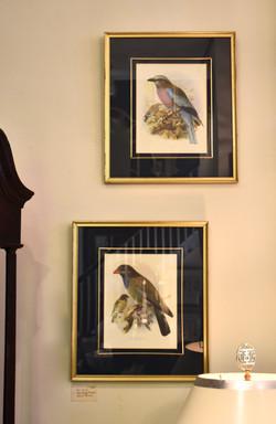 Framed Vintage Bird Pictures