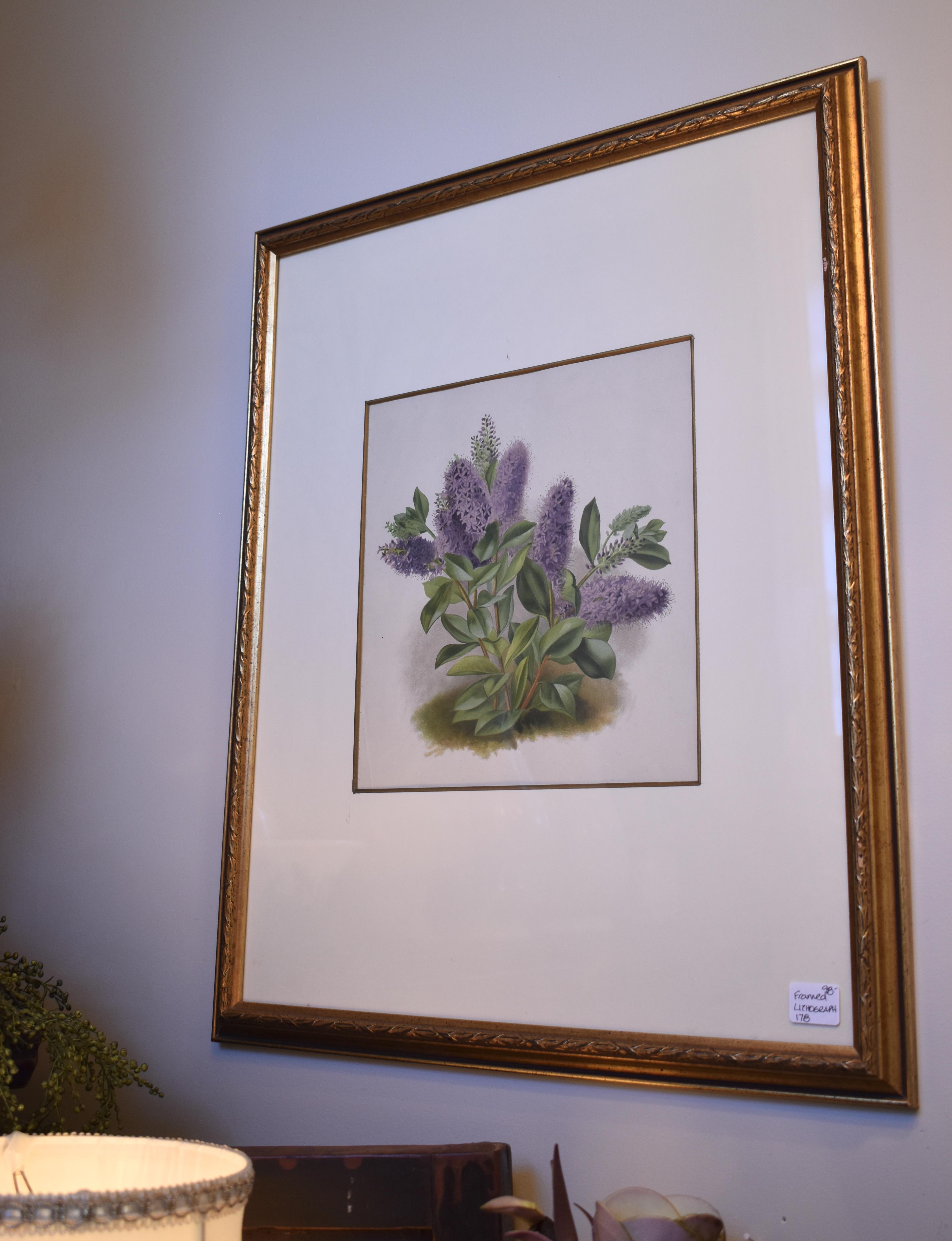 Framed Vintage Botanical
