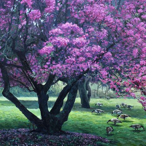 RBG Arboretum