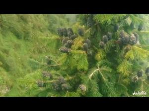 Hindi Movie Le Chal Apne Sang Mp3 Songs Download