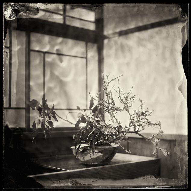 Ikebana 14