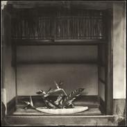 Ikebana 30
