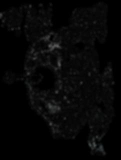 SkullBlack.png