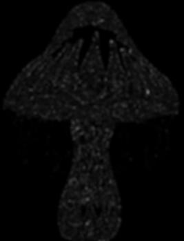 Void Shroom Black.png