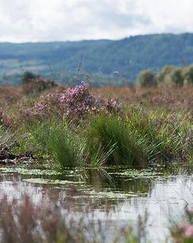 Peatland Action restoration event - Cunn