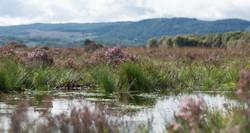 Peatland Action