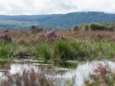 Our first Peatland Connections blog is coming soon.