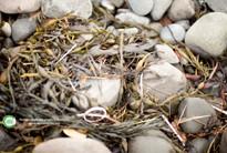 Reduce single use plastics in Scoltand (