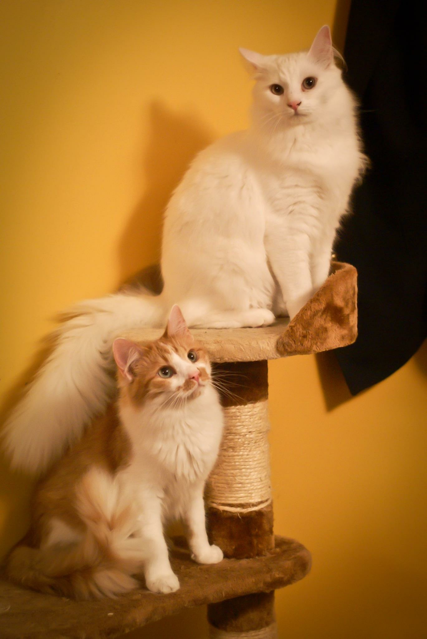 Casper & Cooper