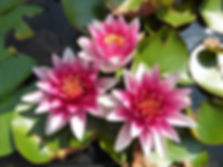 flower-1768645_1920.jpg