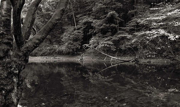 Creek-Bend-(Left).jpg