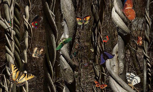 Chinese-Butterflies.jpg