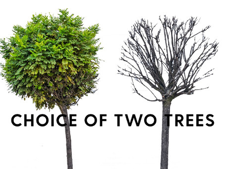 Choice of Two Trees