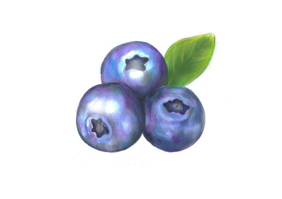 Blueberries - pencils