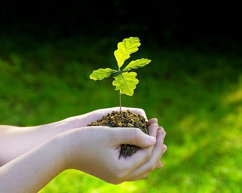 sapling-hands1.jpg