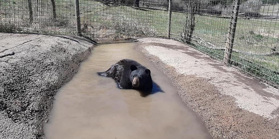 Bear Bubble Bath!