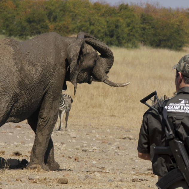 Gameways Anti-Poaching Elephant_1200x800