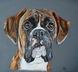 Boxer dog portrait  - Lilly
