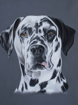 Lucy the Dalmatian