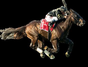 video-horse-stallion-hashtag-racing-hors