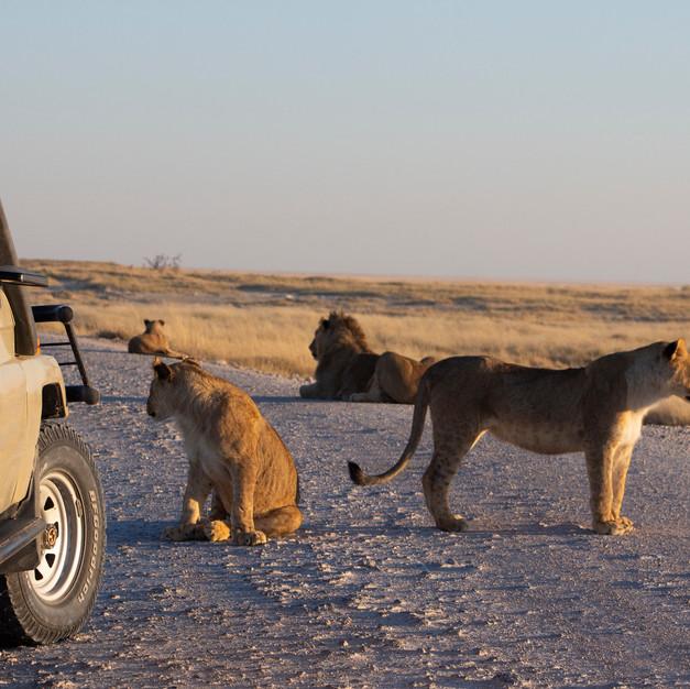 African road block
