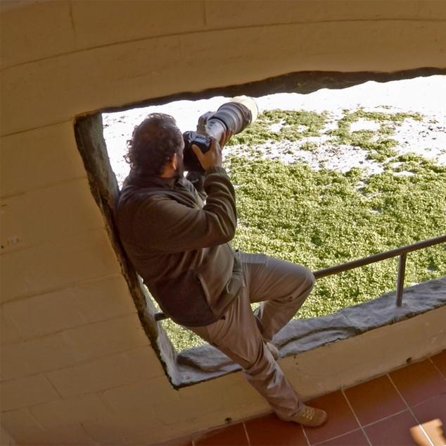 Gannet Hide