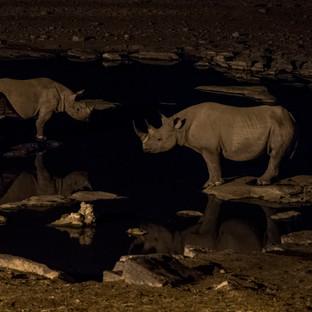 Night Time Rhinos
