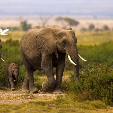 Elephants in Line