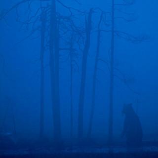 Bear in the Mist