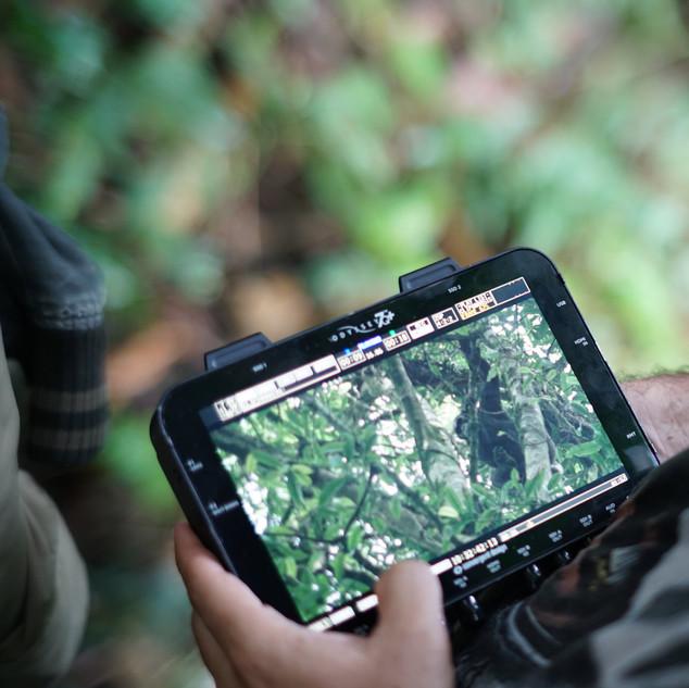Filming the Chimpanzees