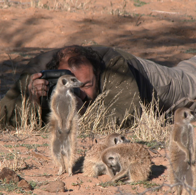 Filming Wildlife of South Africa