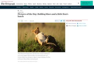 The Telegraph Online