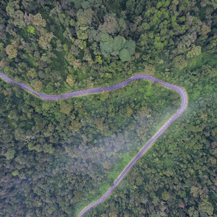Nyungwe Forest Road