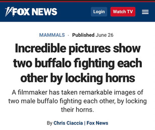 Fox News - Buffalos