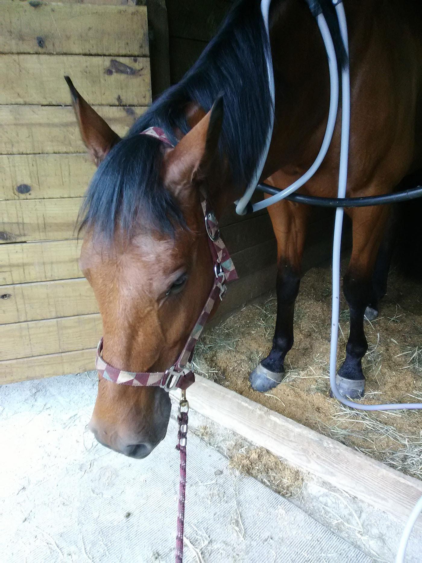 Equine – 1 Session