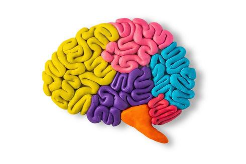 Clay model of brain anatomy on white bac