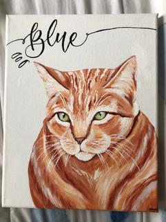 Blu the cat