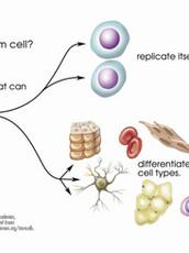 Tips til hva som kan øke stamceller i blodet ditt.
