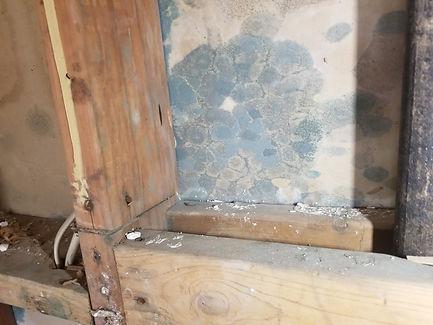 Re-Freshen Mold pic basement
