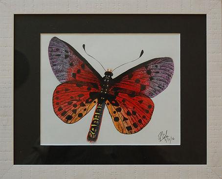 Roy Butterfly 2.JPG